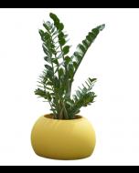 Vase design Blos Pot - Slide